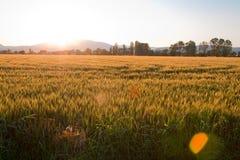 заход солнца страны Стоковое фото RF