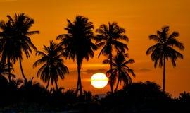 Заход солнца с кокосовыми пальмами силуэта Стоковые Изображения RF