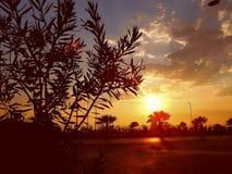Заход солнца с кустом, поездка, ладонь стоковые изображения rf