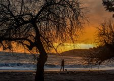 Заход солнца с морем и деревом стоковая фотография rf