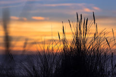 Заход солнца с силуэтами травы Стоковое Фото