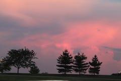 Заход солнца с соснами стоковое фото rf