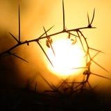 заход солнца терновый Стоковые Изображения