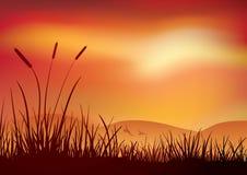 Заход солнца топи. Иллюстрация вектора