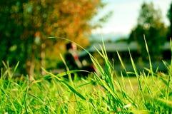 заход солнца травы Стоковые Изображения RF