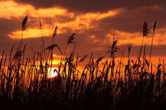 заход солнца травы Стоковые Изображения