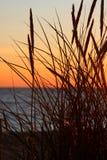 заход солнца травы Стоковая Фотография