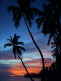 заход солнца тропический стоковая фотография