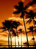 заход солнца тропический Стоковая Фотография RF