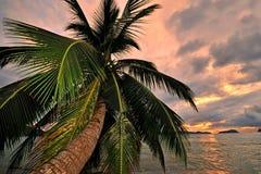 заход солнца тропический Стоковое Фото