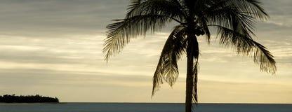 заход солнца тропический Стоковые Фотографии RF
