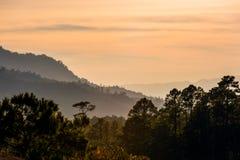 Заход солнца тропического леса Стоковое Фото
