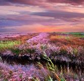 Заход солнца Украины на море Азова стоковое фото rf