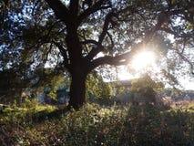 Заход солнца уровня земли стоковые фотографии rf