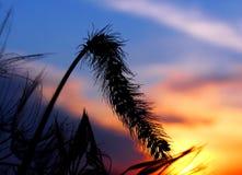 заход солнца уха стоковые изображения rf