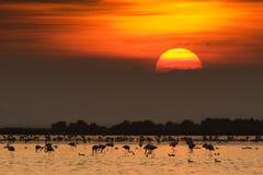 заход солнца фламингоа Стоковое фото RF