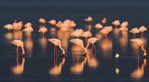 заход солнца фламингоа Стоковые Изображения RF