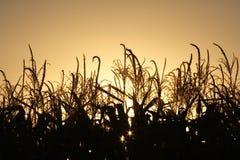 заход солнца хлебоуборки осени Стоковое Изображение