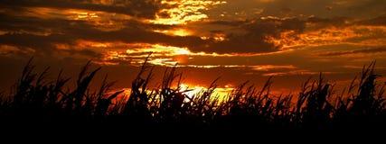 заход солнца хлебоуборки Стоковые Фото