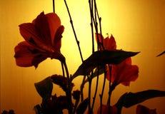 заход солнца цветеня Стоковое Фото