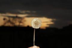 заход солнца цветка против одичалого стоковые изображения