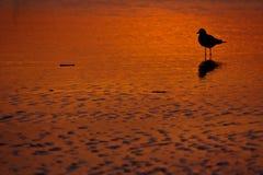 заход солнца чайки пляжа Стоковые Фотографии RF