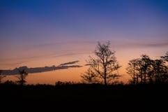 Заход солнца через деревья болот стоковые изображения rf