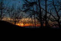 Заход солнца через деревья и ветви стоковые фотографии rf