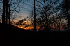 Заход солнца через деревья и лимбы стоковое изображение