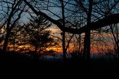 Заход солнца через деревья стоковая фотография rf