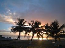 Заход солнца через кокосовые пальмы стоковое фото rf