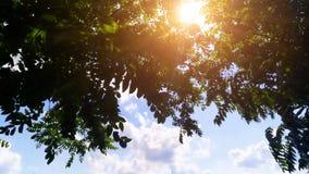 Заход солнца через силуэт деревьев ветвей на голубом небе стоковая фотография