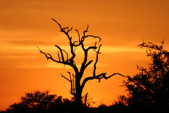 заход солнца 2 африканцев Стоковая Фотография RF