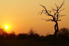 заход солнца 2 Африка южный Стоковое фото RF