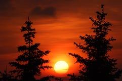 заход солнца 2 елей Стоковые Фото