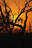 заход солнца 2 bushveld Стоковое фото RF