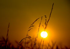 заход солнца 6 Стоковые Изображения RF