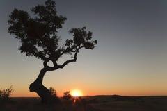 заход солнца alentejo стоковое фото