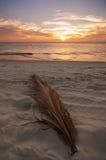 заход солнца aruba Стоковое Фото