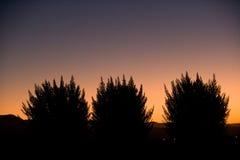 заход солнца bush стоковое фото
