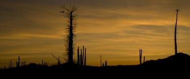 заход солнца catavinia Стоковые Изображения