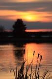 заход солнца cattails Стоковые Изображения RF