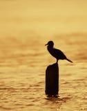 заход солнца cormorant Стоковое фото RF