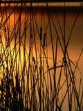 заход солнца coulours Стоковая Фотография