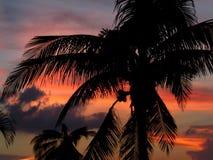 заход солнца cozumel Стоковое Изображение
