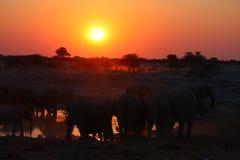 заход солнца elefants Стоковая Фотография RF