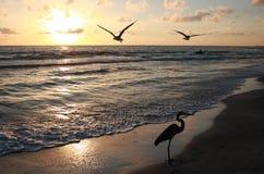 заход солнца florida Стоковое Изображение