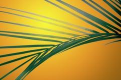 заход солнца frond Стоковое Изображение RF