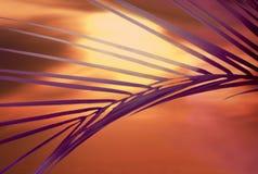 заход солнца frond стоковые фотографии rf