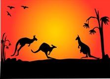 заход солнца kangroo Стоковые Изображения RF